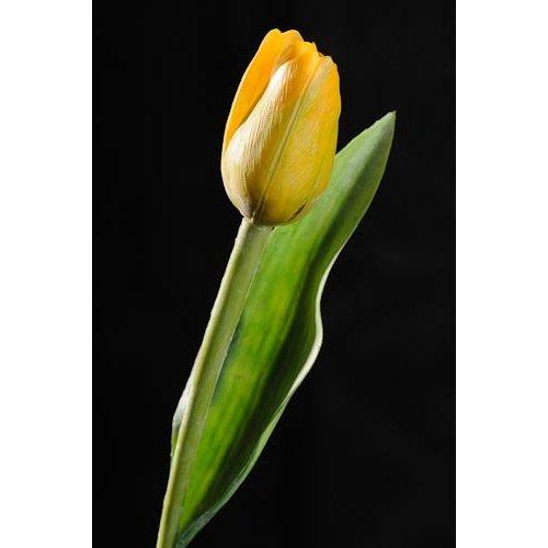 Tulipán žlutý NAT