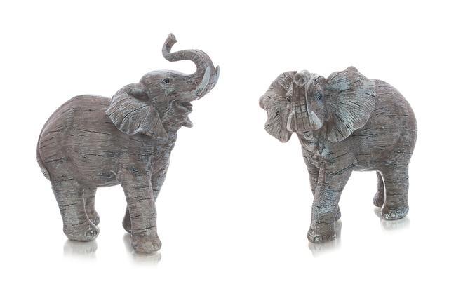 Slon šedý s chobotem nahoru