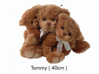 Medvídek Tommy