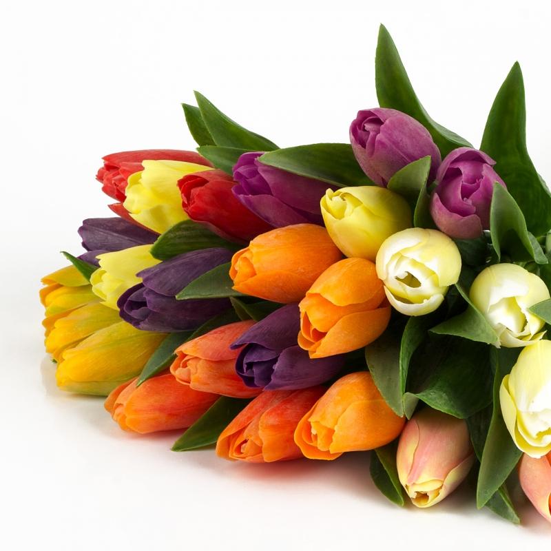 Tulipány barevné 5 kusů