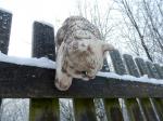 Keramická Perská kočka s hlavou dolů color Šedá